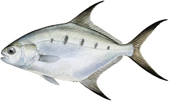 Dart group western australian recreational fishing rules for Washington fishing regulations